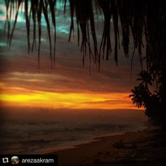Golden horizon through coconut leaves captured by @arezaakram with @stockphotolk  Share your photographs with #stockphotolk Sign up on www.stockphoto.lk for free and convert your creativity into revenue! .  Wadduwa Sri Lanka - Sept 2015  #srilanka #neverstopexploring #wadduwa #sunset #beach #ocean #photography #travelgram #travelpics #travelporn #traveldiary #travelawesome #travelblogger #travelphotography #travelisthenewclub #wanderlust #igers #igtravel #netgeo #travelsrilanka…