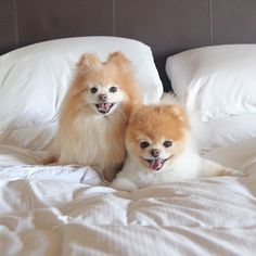 Boo and Buddy, beautiful as always and ready for bed!