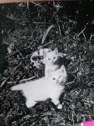 「伊原 美代子」の画像検索結果