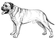 The Bullmastiff Dog Breed is 40 per cent Bulldog and 60 per cent Mastiff.