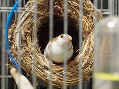 Çocuklu aileler için uygun kuş seçimi Bird, Animals, Animales, Animaux, Birds, Animal, Animais