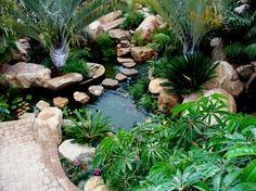 Koi Pond - tropical - landscape - san diego - David Klages Design