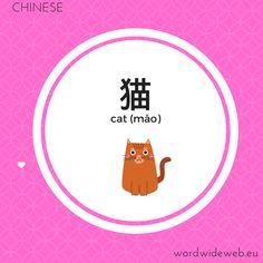 猫 cat Word Wide Web, Learn Mandarin, Photo And Video, Learning, Words, Instagram, Studying, Teaching, Horse