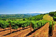 Serbian vineyards