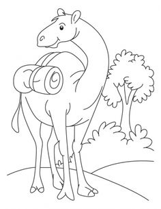 Camel is sitting in the desert coloring page Download Free Camel