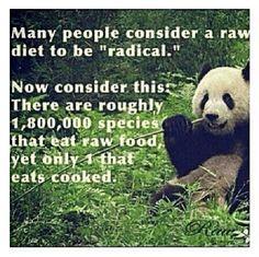 Raw vegan animals