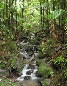 Blue Mountains, Jamaica