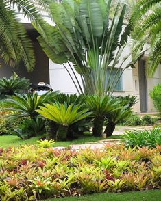 55 Beautiful Tropical Plants For Backyard Landscape Ideas To Make Your Home More Awesome Ideas for House Renovations Tropical Backyard Landscaping, Tropical Garden Design, Florida Landscaping, Landscaping Plants, Front Yard Landscaping, Landscaping Ideas, Tropical Gardens, Tropical Plants, Acreage Landscaping
