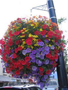 Hanging basket, Canada