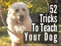 Ahh puppies, school is in session! Pet Accessories, Dog Toys, Cat Toys, Pet Tricks