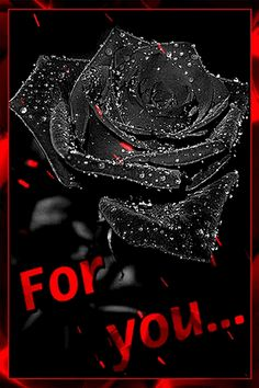Love Wallpapers Romantic, Beautiful Flowers Wallpapers, Beautiful Rose Flowers, Beautiful Gif, Love Rose, Romantic Images, Good Night Love Quotes, Good Night Gif, Love Heart Images