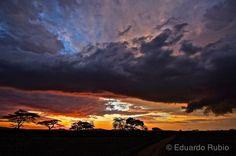 """La Reserva Nacional de Masái Mara, una continuación del Parque Nacional del Serengueti, es una """"reserva natural nacional"""" situada al sudoeste de Kenya y recibe su nombre por la tribu masái que la h..."""