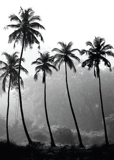 Posters | Tavla med fotografi med palmer i svartvitt, 50x70cm