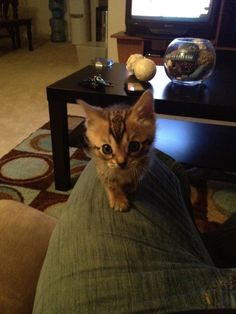"""""""My toy is trapped under the couch again, Dad.""""  Photo viaImgur"""