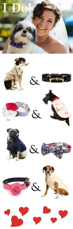 "Say ""I Do"" to designer dog fashion! FelixChien.com has luxury dog accessories so you can have your pooch join the festivities in style!"