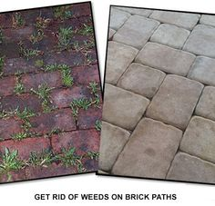Use baking soda to get rid of weeds on brick paths. Just sprinkle it over the bricks and the baking soda will neutralize the ph in the soil so nothing will grow.