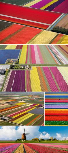 Amazing fields of tulips! Must be fantastic in person-so much more exotic than corn fields :)