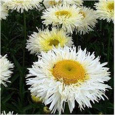 Évelő kerti virágok, Sziklakerti és talajtakaró évelők Plants, Plant, Planets