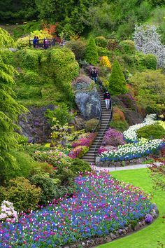Tulip Garden, Butchart Gardens, CA. Definitely have to go here. Most Beautiful Gardens, Beautiful Flowers Garden, Amazing Gardens, Exotic Flowers, Purple Flowers, Spring Flowers, Landscape Design, Garden Design, Buchart Gardens