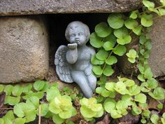 Thrift store angel among creeping jenny. Check it out at www.1196sqft.blogspot.com.