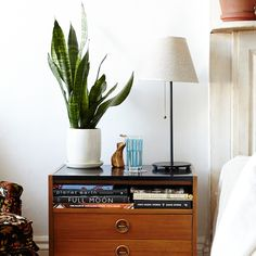 The Sill's indoor greenery expert shares her picks for pretty plants that won't die as soon as you bring them home, and how to care for them.
