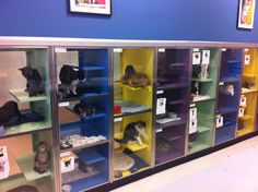 Our multi colored cat cages help show potential families which animals are available for adoption.