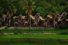 Exotism of Tana Toraja, Sulawesi, Indonesia.     More photos at http://indsight.co.id/article/68  (Photo by IndSight/Ifan F. Harijanto)