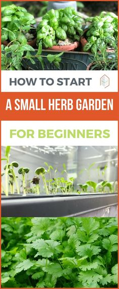 How to Start a Small Herb Garden for Beginners. How to start a small herb garden? Find out now! Fortunately for gardeners, growing herbs is reasonably easy. | Posted by: SurvivalofthePrepped.com