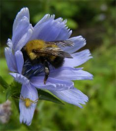 busy bee..