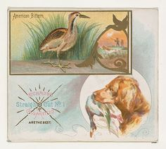 American Bittern, from the Game Birds series (N40) for Allen & Ginter Cigarettes, 1888–90. The Metropolitan Museum of Art, New York. The Jefferson R. Burdick Collection, Gift of Jefferson R. Burdick (63.350.202.40.1)