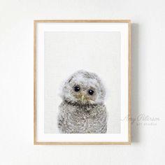 Baby Owl Print, Woodland Animal, Nursery Art, Nursery Decor, Baby Owl Animal Art by Amy Peterson