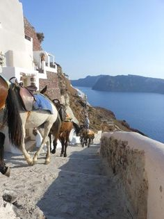 Our concierge at Oia Mansion can arrange for you a Donkey ride from Amoudi Bay to Oia. www.oiamansion.com