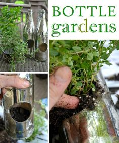 Hanging garden! This would be fabulous hung along a deck or porch roof! For kids, use plastic bottles.