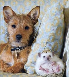 16 Reasons Hedgehogs are better politicians!!