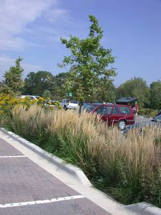 Curb Cut Urban Landscape, Landscape Design, Parking Design, Car Park Design, Parking Lot, Parking Curb, Sponge City, Landscape Engineer, Street Trees