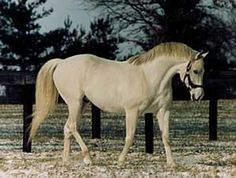 Cozzene - Breeders Cup winner and sire of 2 Breeders Cup winners, Alphabet Soup and Tikkanen Color Wars, Dream Stables, Feel Good Stories, Scottish Gifts, Thoroughbred Horse, Racehorse, Show Horses, Horseback Riding, Horse Racing