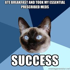 chronic illness cat... ate breakfast and took my essential prescribed meds.... SUCCESS #EDS #EhlersDanlos #CFS