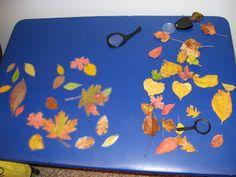 Blue Preschool: Fall Leaves Lesson