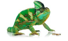 #reptiles #animales #mascotas #iguana #alimento #iluminacion #naturaleza. Iluminación para reptiles:Tienda online para mascotas: www.theanimallshop.com