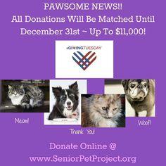It's ‪#‎GivingTuesday‬ all over the world, but we hope you will consider giving locally to senior pets in need. Thanks to a generous sponsor, our matching gift fundraiser is underway until December 31, so if you give during the month of December, your donation will be DOUBLED. As of today, we have raised $1536 towards our $11,000 goal ~ so we're just getting started! We need your help to keep saving senior pets at risk. Thank you for your support!