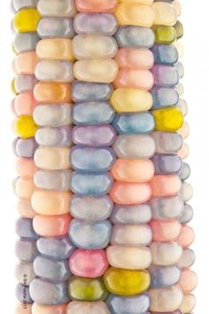 Zea may 'Glass Gem' (aka 'Glass Gems', 'Glass Gem Corn', 'Rainbow Corn'). There seems to be some disagreement over the details . Colorful Fruit, Exotic Fruit, Colorful Plants, Rainbow Corn, Colored Corn, Glass Gem Corn, Popcorn Seeds, Seed Bank, Fruits And Veggies