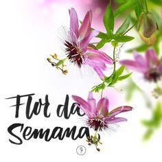 A Flor de Maracujá é linda, diferente e super brasileira. Conheça mais sobre essa flor.