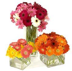 gerbera daisy centerpieces