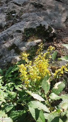 Pflanze auf Felsen Plants, Magic Forest, Rocks, Nature Pictures, Flowers, Plant, Planets
