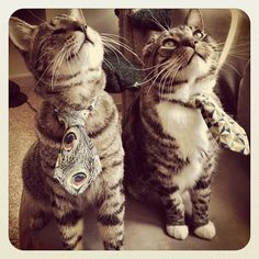 Oskar & Klaus ... sporting their new line of kitty neckties :-)   (apparently, available for sale online soon!)