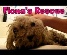 Fiona's Amazing Story! - what a sweet and sorta sad story!