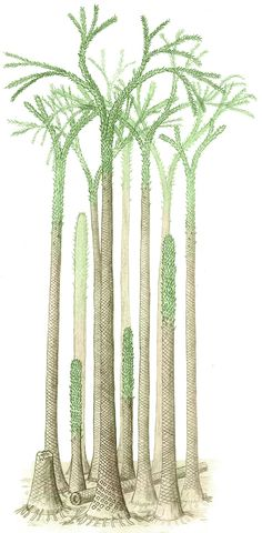 Arbres lycopodes