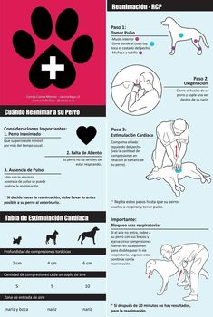 Here are some helpful First Aid tips for Dogs. Your help . - Here are some helpful First Aid tips for Dogs. Your help can save a life! Animals And Pets, Cute Animals, Diy Stuffed Animals, Pet Health, Pet Accessories, Dog Care, Dog Grooming, Dog Toys, I Love Dogs
