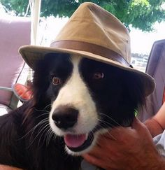 border collie 25 Reasons Why No One Should Ever Have A Border Collie As A Pet - Smug. Border Collie Colors, Border Collie Pictures, Collie Puppies, Collie Dog, Terrier Puppies, Bull Terriers, Perros Border Collie, Border Collies, Border Collie Names