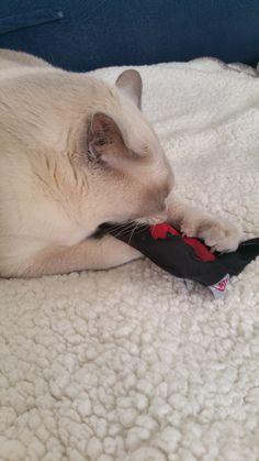 Jouet coussin pour chat rempli de valériane #regardfelinlaboutique